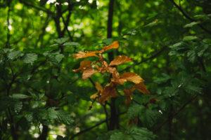 Teutoburger Wald in Bielefeld, Nordrhein-Westfalen, Deutschland, rund um den Botansichen Garten