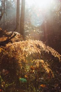 Wald bei Augustdorf im Furlbachtal, Herbstwanderung