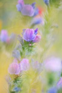 Wildflower meadow,
