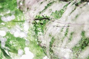 Birke, Doppelbelichtung, Wald