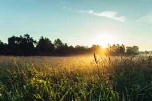 Bielefeld, Johannisbachaue, sunrise, sunrise, meadow