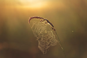 Morgenstimmung bei Bielefeld, Johannisbachaue, Sonnenaufgang,  Wiese, Pflanzen, stimmungsvoll