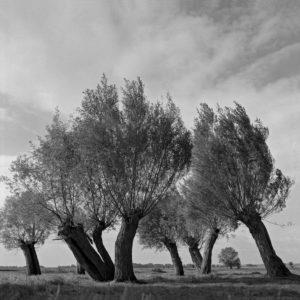 Weiden bei Penkefitz, Dannenberg