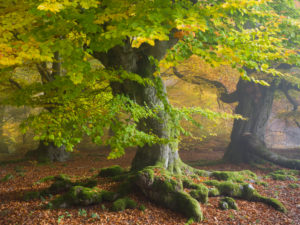 Autumn in the Kellerwald National Park
