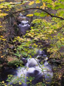 Bode in autumn, Harz National Park, Saxony-Anhalt, Germany