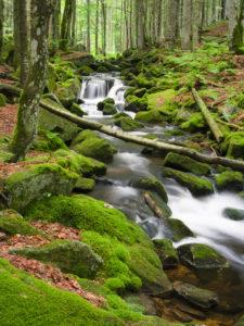 Kleine Ohe, Nationalpark Bayerischer Wald, Bayern, Deutschland