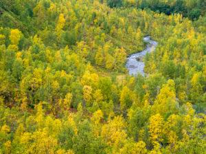 Herbstfärbung, Insel Senja, Norwegen