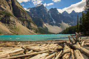 Moraine Lake with driftwood, trunks in the water, mountains, Alberta, Canadian Rocky Mountains