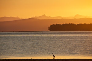 Evening light with view at the sea and the mountains in the background, orange coloured, lonesome bird