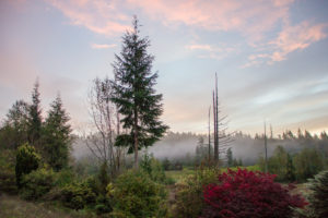 Landscape in the morning fog with delicate pink clouds, Canada