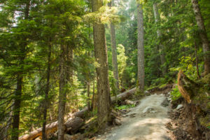 Forest way, trail in the coniferous forest, sun shining through, Canada