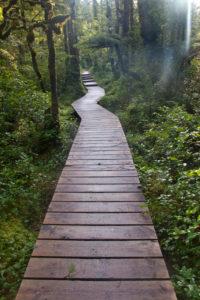 Cape Scott Provincial Park, wooden path through the forest, planks, Canada