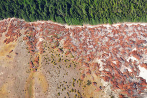 Drone photos show rainforest clearance for agriculture, New Zealand