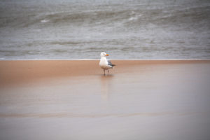 Seagull Perching On Sand, Sylt, Germany