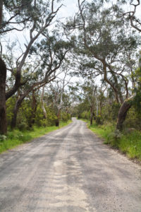 Way to the bush forest
