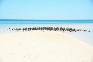 Birds on beach, Exmouth, Australia