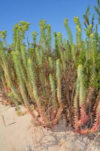 Australian, vegetation