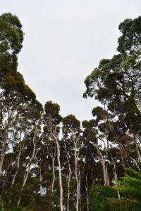 Australia, Tasmania, South-West National Park, Macquarie Harbour, trees