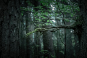 CGI, monster in the forest