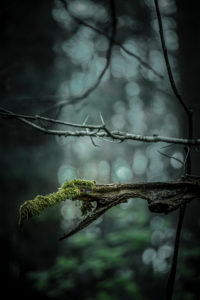 CGI, Monster im Wald