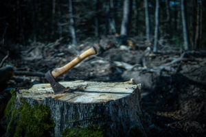 The ax in the forest