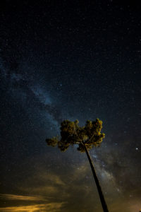Pine tree, starry sky, on the Atlantic coast, France
