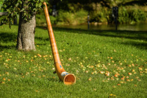 Alphorn leaning against an apple-tree, apples lay in the grass, Böhming, Bavaria, Germany