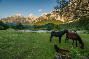 On the scenic path from Valbona over mountain peaks to Theth, past a paddock, Rrogam, Valbona (Valbonë), Kukës, Albania.