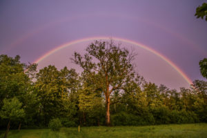 A rainbow stands directly over an old tree after a rain, Leutkirch, Baden-Württemberg, Germany.