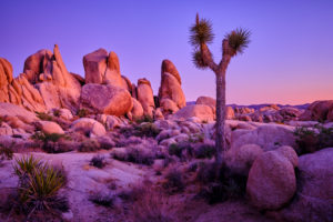 USA, United States of America, california, palm Springs, Joshua Tree National Park, jumbo rocks campground, white King campground,