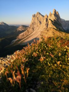 Seceda and Odle peaks in the evening light, close to the ground,