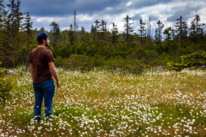 Europe, Germany, Bavaria, Bavarian Forest, National Park, Man standing in blooming cotton gras field