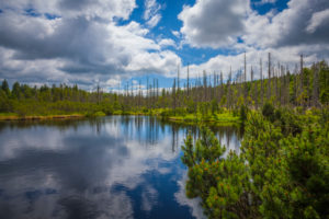 Europe, Germany, Bavaria, Bavarian Forest, National Park, Latschensee Lake, Reflection of sky and trees,