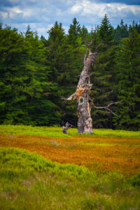 Europe, Germany, Bavaria, Bavarian Forest, National Park, Tree Trunk on field
