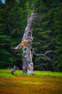 Europe, Germany, Bavaria, Bavarian Forest, National Park, tree trunk