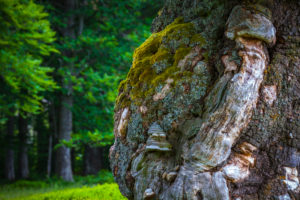 Europe, Germany, Bavaria, Bavarian Forest, National Park, Old Tree trunk