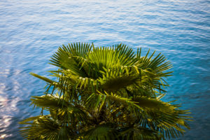 Europe, Italy, Lago di Garda, Limone sul Garda, palm trees on the lakeshore,
