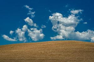 Europe, Italy, grain field near Volterra, Tuscany, Province Pisa,