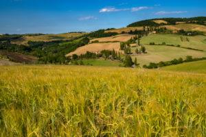 Europe, Italy,Pienza, Monticchiello, Tuscany, Tuscan Landscape, Cipressi di Monticchiello, Province of Siena,