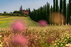 Europe, Italy, Agriturismo Covili, Farmhouse Poggio Covili, Cypress Alley, Tuscany, Tuscan Landscape, Province of Siena,Castiglione D'orcia,