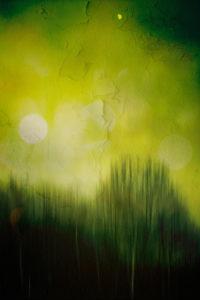 Waldrand, surreale Unschärfe mit lens flares,
