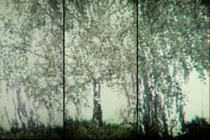 Die Collage von jungen Birken welche Schatten an eine Fassade werfen.
