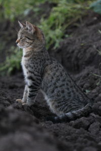 Curious young tabby cat sitting inside garden