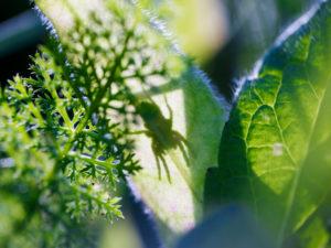 unscharfe grüne Blätter auf einer Wiese, Spinne, Schatten, Silhouette