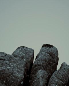 Felsen mit Flechten vor weißem Hintegrund