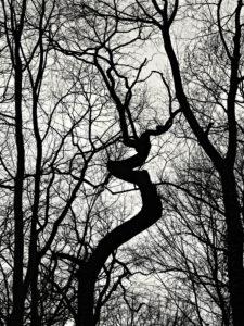 Bäume und ƒste als Schattenriss vor weißen Himmel