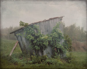 old wooden hut with bracing at a vineyard with meadow
