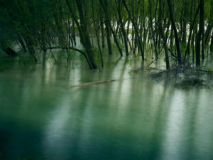 Überschwemmungsgebiet des Rhein, Wasser, Natur
