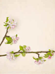 Apple branch and flowers on a light background
