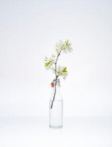 Durchsichtige Flasche mit Kirschzweig und Blüten